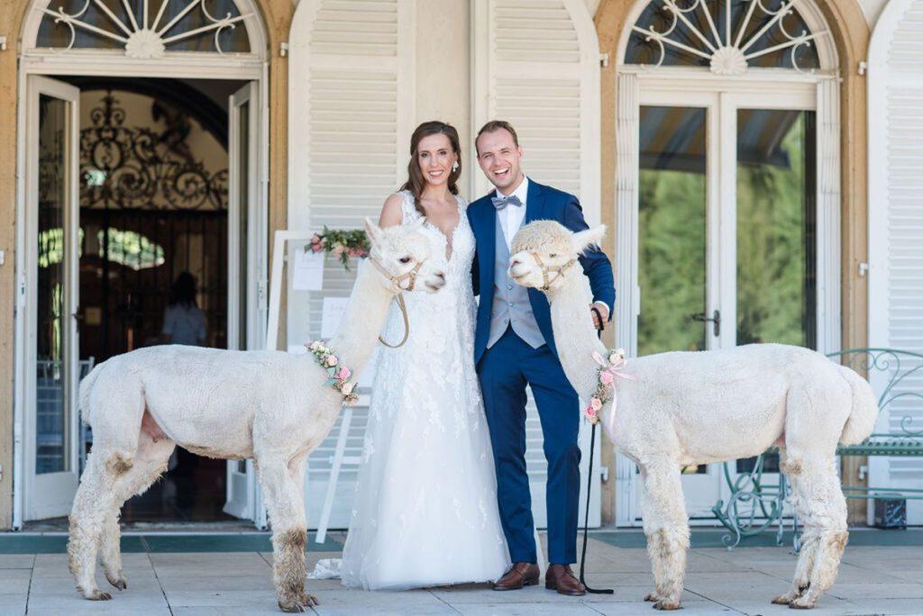 Brautpaar auf Hochzeit mit Alpakas